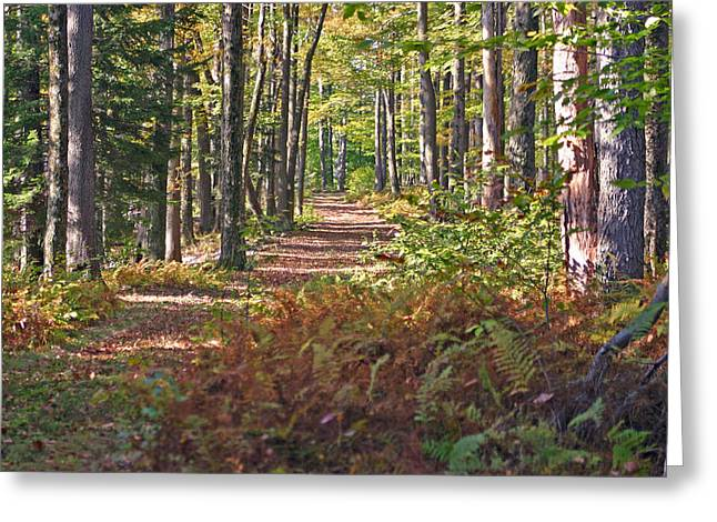 Promised Land Greeting Cards - Autumn Ferns Greeting Card by David Rucker