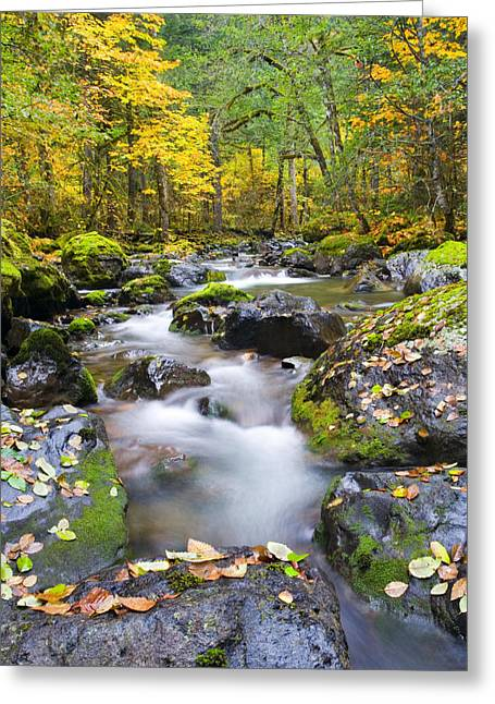 Stream Greeting Cards - Autumn Flow Greeting Card by Mike  Dawson