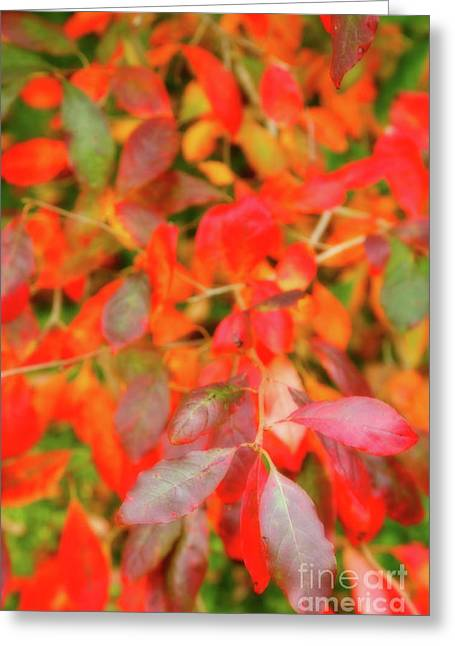 Redish Greeting Cards - Autumn foliage Greeting Card by Gaspar Avila
