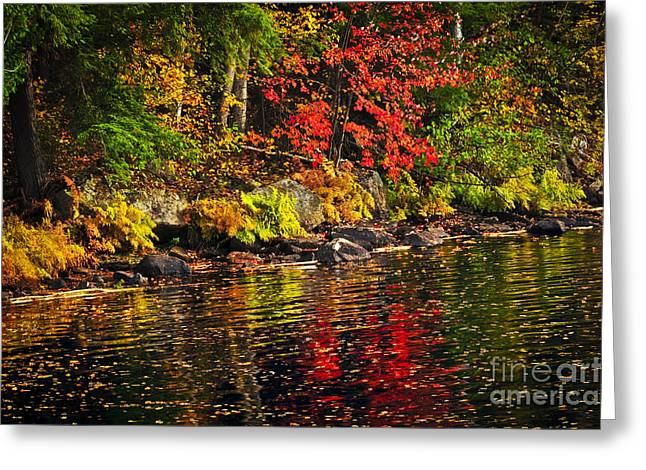 Water Flowing Greeting Cards - Autumn forest and river landscape Greeting Card by Elena Elisseeva