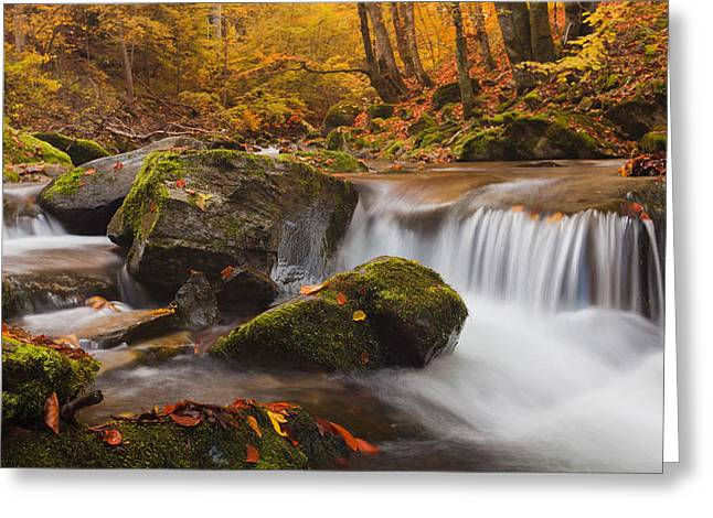 Reserve Greeting Cards - Autumn Forest Greeting Card by Evgeni Dinev