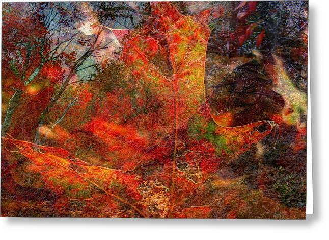 Jeff Breiman Greeting Cards - Autumn Fusion 2 Greeting Card by Jeff Breiman