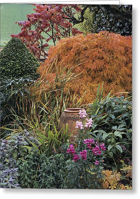 Vinegar Greeting Cards - Autumn Garden Greeting Card by Archie Young