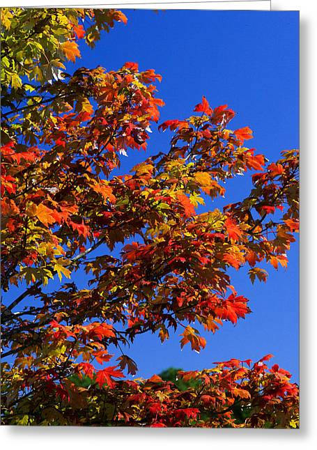 Autumn Glory Greeting Card by Christopher McPhail