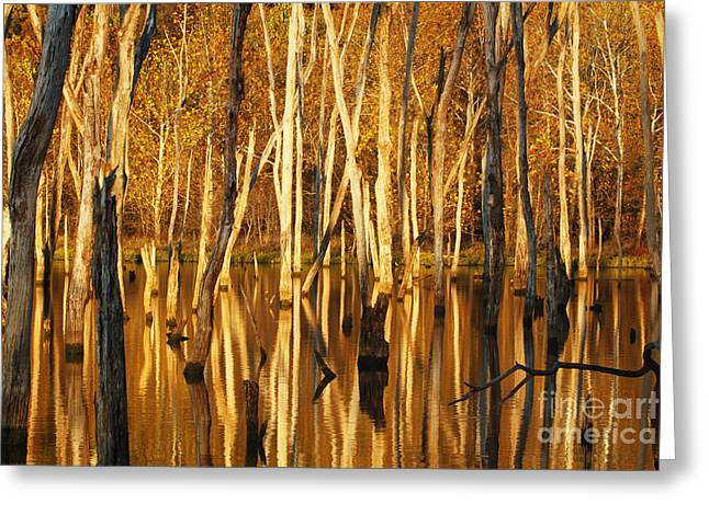 Fall Scenes Greeting Cards - Autumn Gold Greeting Card by Dennis Hedberg