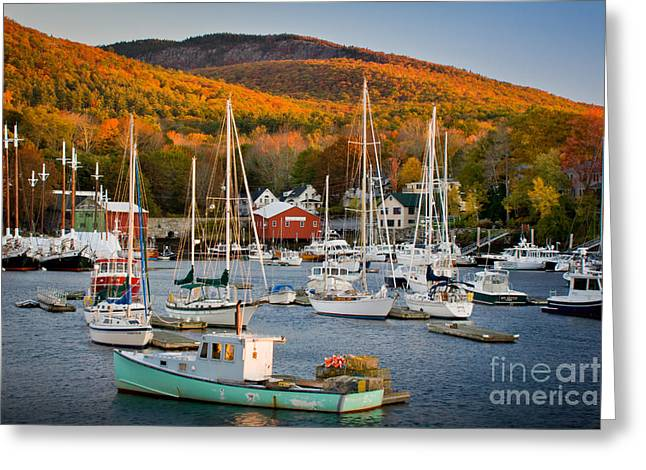 New England Foliage Greeting Cards - Autumn Gold Greeting Card by Susan Cole Kelly