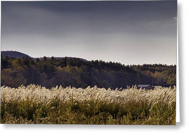 Autumn Grasses - North Carolina Autumn Scene Greeting Card by Rob Travis