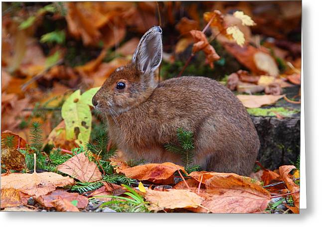 Hare Greeting Cards - Autumn Hare Greeting Card by Bruce J Robinson