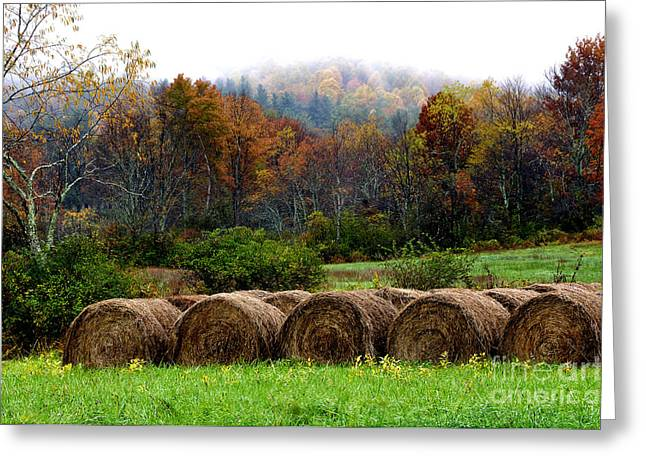 Nicholas Greeting Cards - Autumn Hay Bales Greeting Card by Thomas R Fletcher