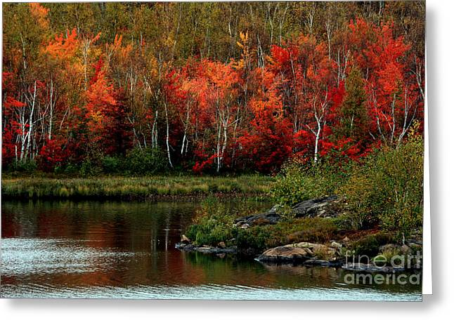 Autumn in Canada 2 Greeting Card by Marjorie Imbeau