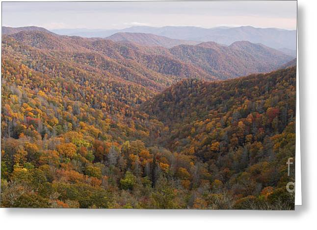 Fall Colors Greeting Cards - Autumn In Great Smokie Mountains National Park Greeting Card by Dustin K Ryan