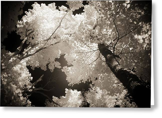 Recently Sold -  - Duo Tone Greeting Cards - Autumn in Infrared Series Number One Greeting Card by Max Buchheit Photography