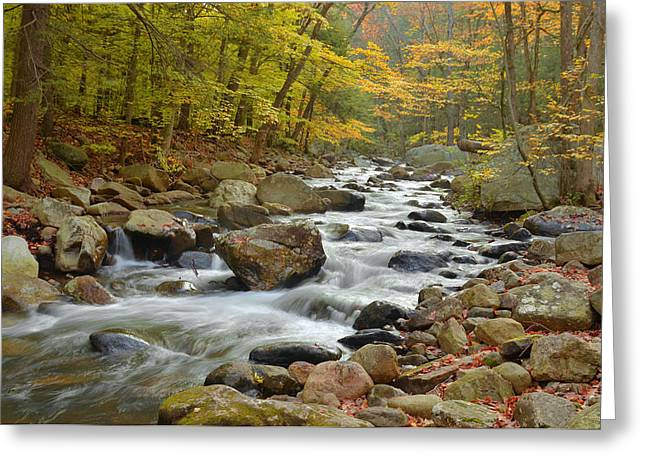 Water Movement Greeting Cards - Autumn In The Forest Greeting Card by Stephen  Vecchiotti
