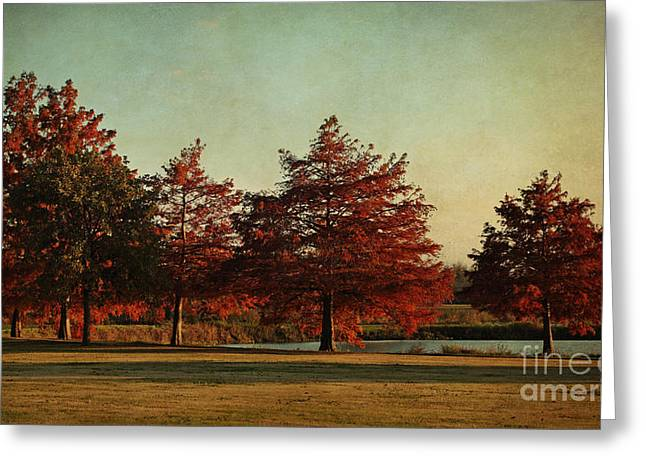 Photos Of Autumn Greeting Cards - Autumn in the Park Greeting Card by Lisa Holmgreen