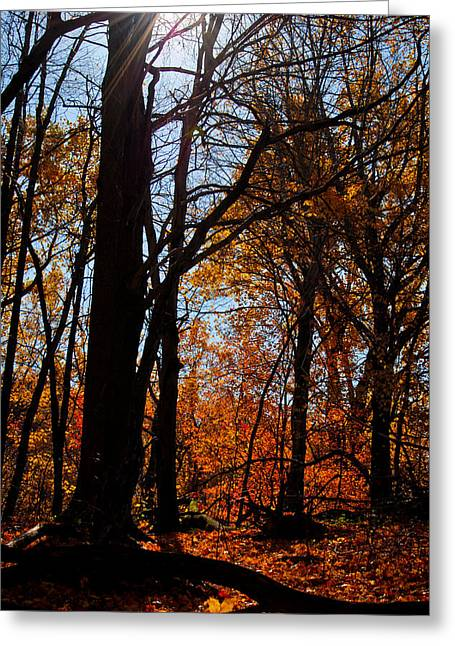 Swift Family Greeting Cards - Autumn Is Here Greeting Card by Swift Family