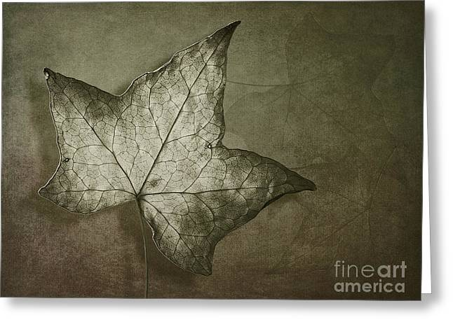 Leaves Photographs Greeting Cards - Autumn Greeting Card by Jan Pudney