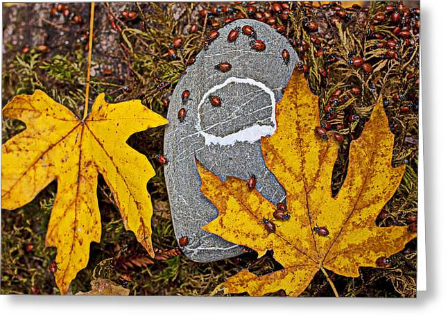 Hibernation Greeting Cards - Autumn Ladybugs Greeting Card by Garry Gay