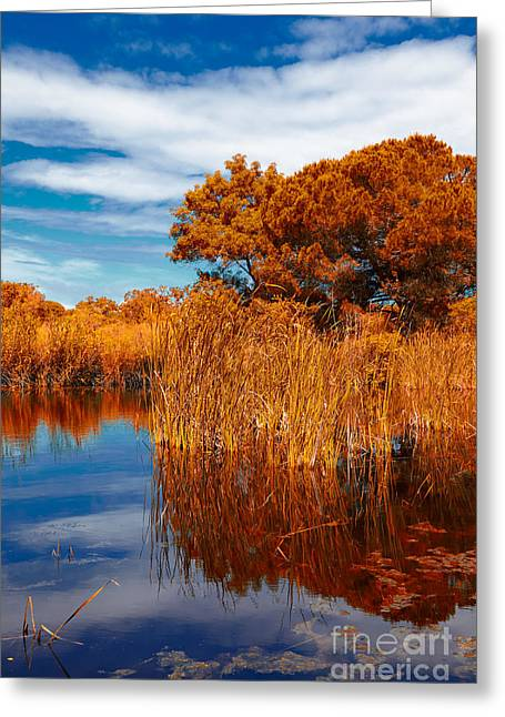 Dry Lake Greeting Cards - Autumn landscape Greeting Card by Gabriela Insuratelu