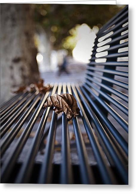 Park Benches Photographs Greeting Cards - Autumn Leaf Greeting Card by Joana Kruse