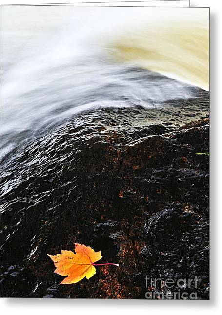 Rapids Greeting Cards - Autumn leaf on river rock Greeting Card by Elena Elisseeva
