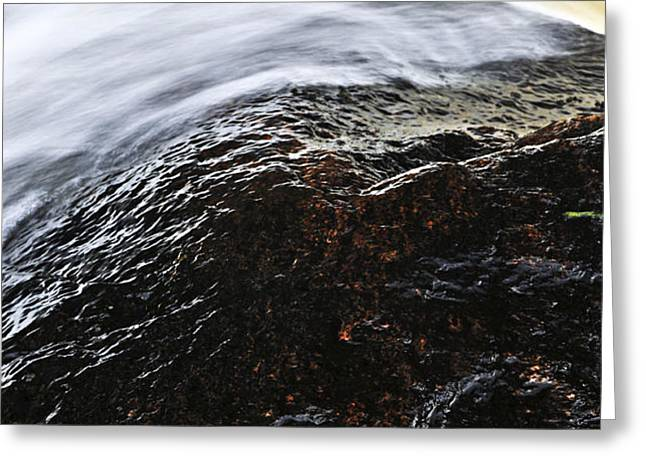 Autumn leaf on river rock Greeting Card by Elena Elisseeva