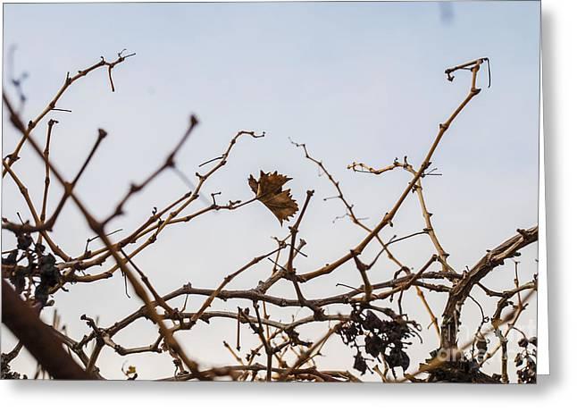 Autumn leaf Greeting Card by Saajid Abuluaih