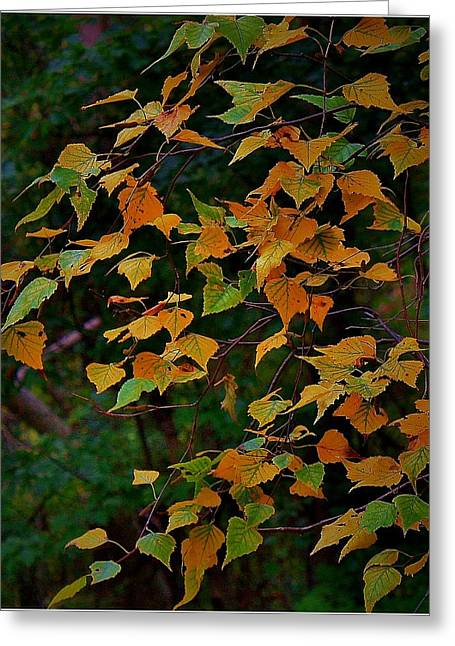 Mikki Cucuzzo Greeting Cards - Autumn Leaves 2 Greeting Card by Mikki Cucuzzo