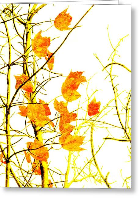 Change Mixed Media Greeting Cards - Autumn Leaves Abstract Greeting Card by Andee Design