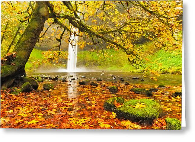 Silverton Greeting Cards - Autumn Leaves at South Silver Falls Greeting Card by Alvin Kroon