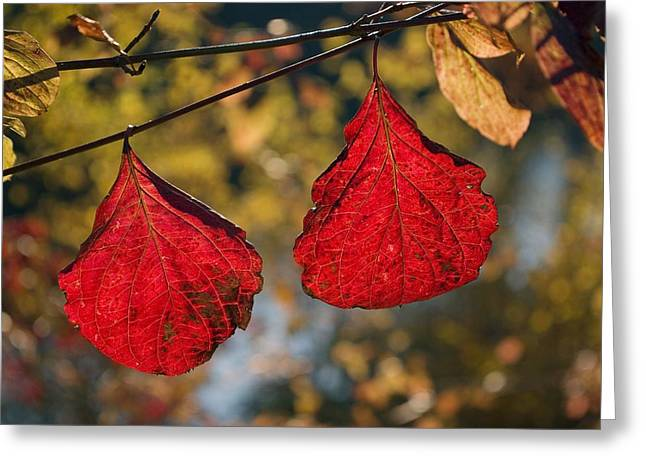 Changing Colour Greeting Cards - Autumn Leaves Greeting Card by Dr Juerg Alean