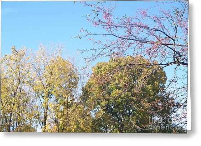 Indiana Autumn Greeting Cards - Autumn Leaves Greeting Card by Sacred  Muse