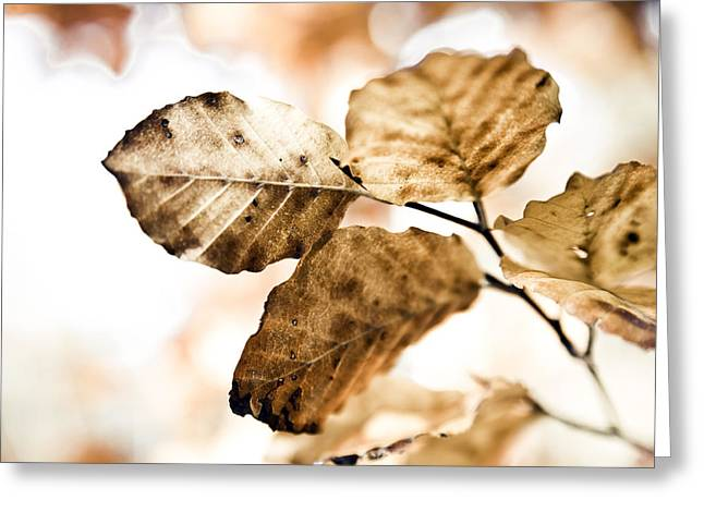 Sanguine Greeting Cards - Autumn Leaves Greeting Card by Frank Tschakert
