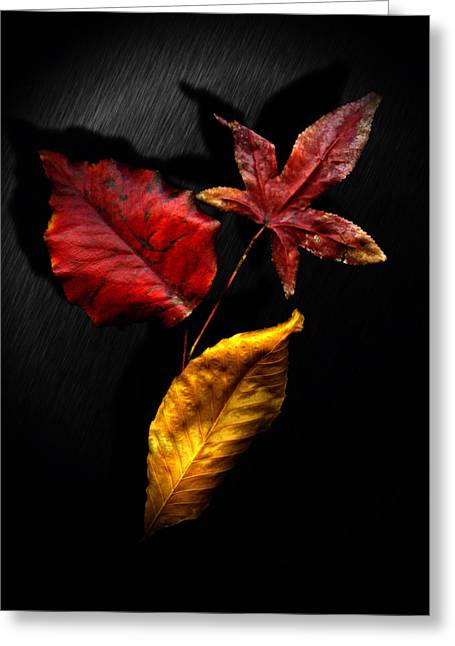 Contemporary_art Greeting Cards - Autumn Leaves Greeting Card by Gerlinde Keating - Keating Associates Inc