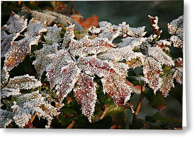 Seasonal Greeting Cards - Autumn Leaves in a Frozen Winter World Greeting Card by Christine Till