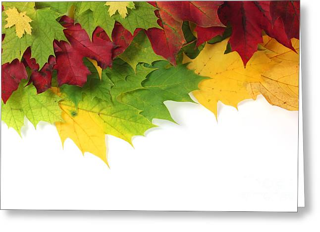Turning Leaves Greeting Cards - Autumn leaves in colour Greeting Card by Simon Bratt Photography LRPS