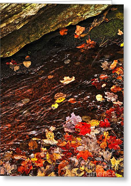 Creek Greeting Cards - Autumn leaves in river Greeting Card by Elena Elisseeva