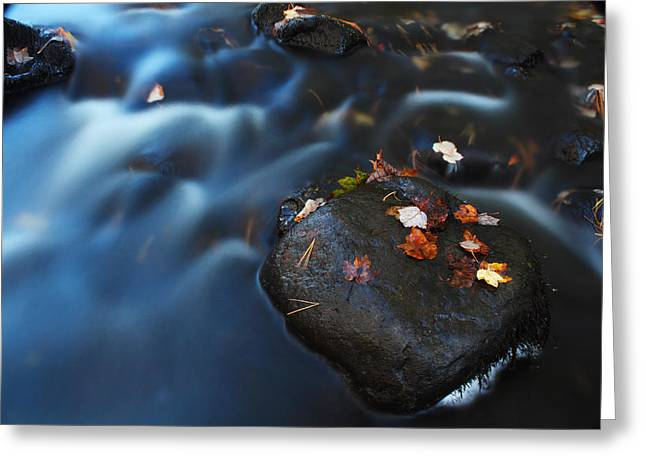 Apacheco Greeting Cards - Autumn Leaves in The Stream Greeting Card by Andrew Pacheco