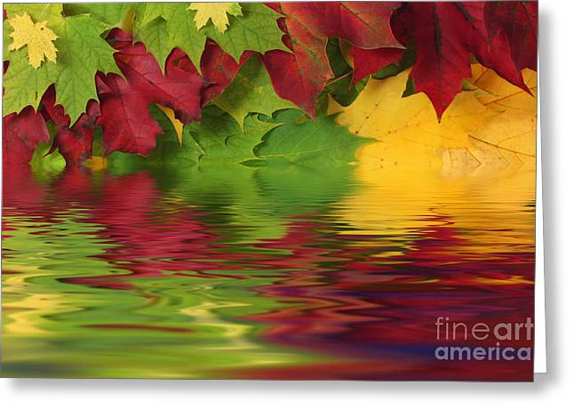 Turning Leaves Greeting Cards - Autumn leaves in water with reflection Greeting Card by Simon Bratt Photography LRPS