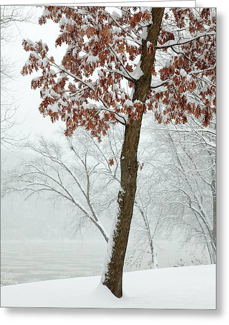Winter Scenes Rural Scenes Photographs Greeting Cards - Autumn Leaves in Winter Snow Storm Greeting Card by John Stephens