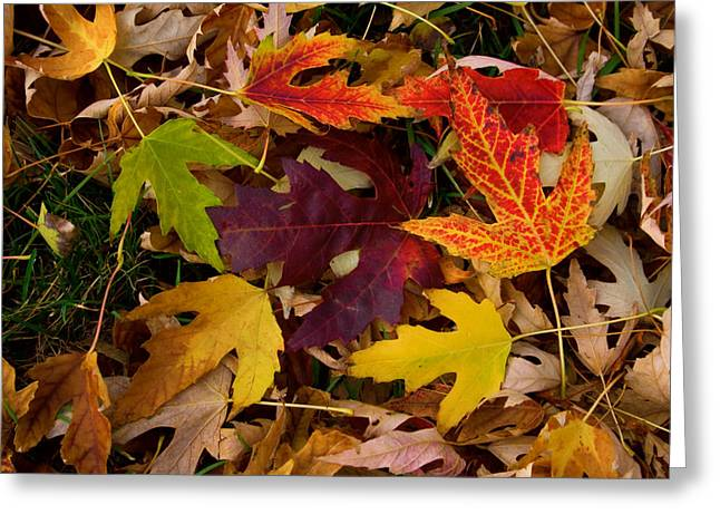 Striking Images Greeting Cards - Autumn Leaves Greeting Card by James BO  Insogna