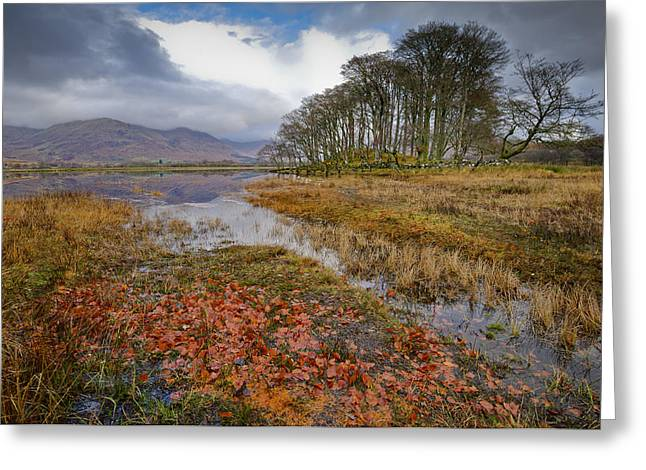 Argyll And Bute Greeting Cards - Autumn leaves Loch Awe Greeting Card by Gary Eason
