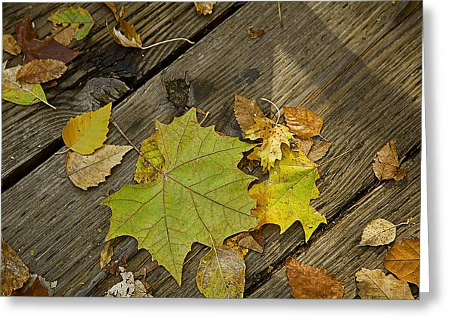 Fallen Leaf Greeting Cards - Autumn Leaves on Wood Greeting Card by M K  Miller