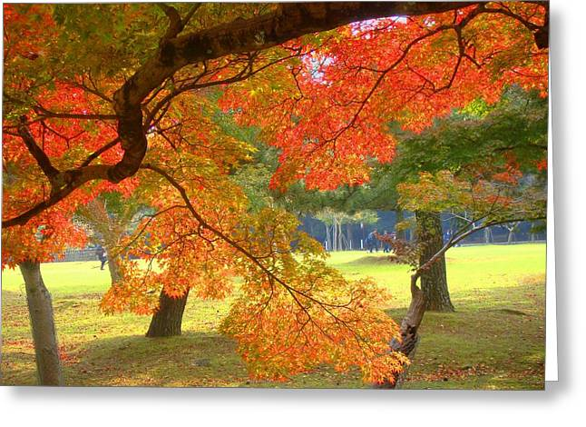 Roberto Alamino Greeting Cards - Autumn Leaves Greeting Card by Roberto Alamino