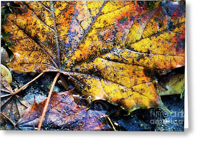 Fall Grass Greeting Cards - Autumn leaves Greeting Card by Sami Sarkis