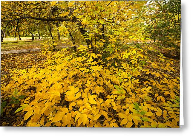 Tree In Golden Light Greeting Cards - Autumn Leaves Greeting Card by Svetlana Sewell