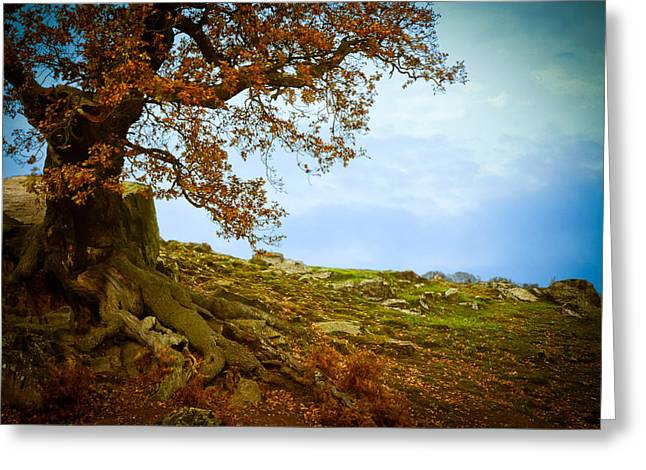Ruth Macleod Greeting Cards - Autumn Ledge Greeting Card by Ruth MacLeod