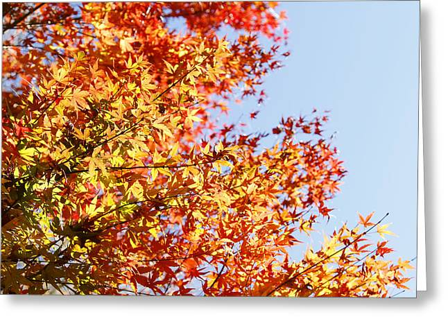 Outdoor Photographs Greeting Cards - Autumn Greeting Card by Les Cunliffe