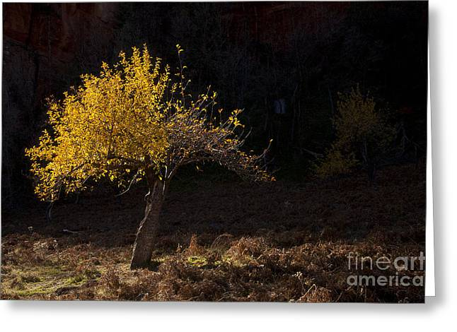 West Fork Greeting Cards - Autumn Light Greeting Card by Mike  Dawson
