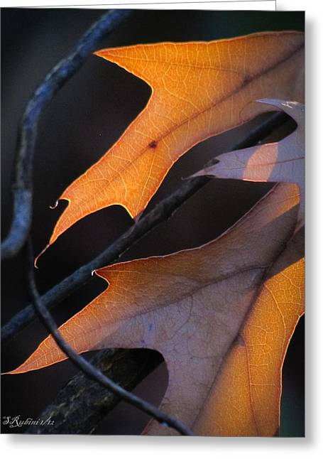 Photo Gallery Website Greeting Cards - Autumn Light No. 2 Greeting Card by Sandy Rubini