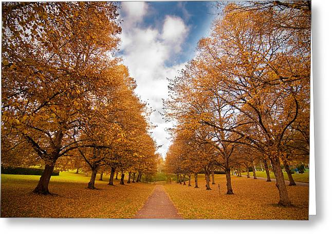 Greeting Cards - Autumn Greeting Card by Micael  Carlsson